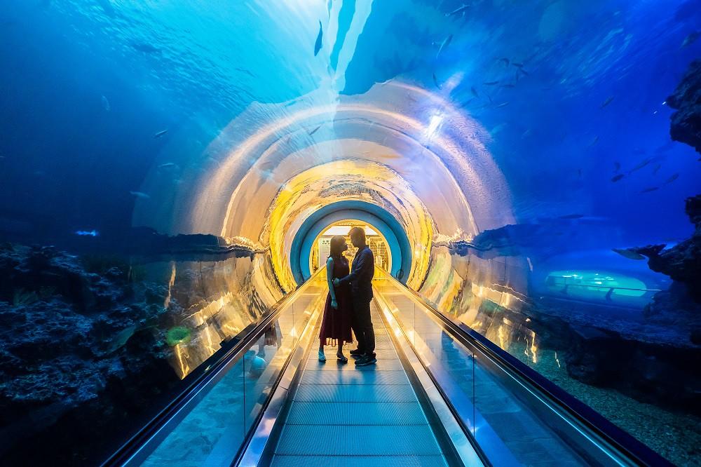 3. 實際走訪海生館著名美拍場景,輕鬆拍出與海洋生物最美的距離與唯美照片