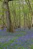 Uffmoor Woods_9X7A2708