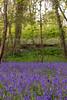 Uffmoor Woods_9X7A2693