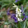 Uffmoor Woods_9X7A2687