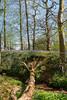 Uffmoor Woods_9X7A2679
