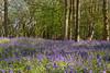 Uffmoor Woods_9X7A2652