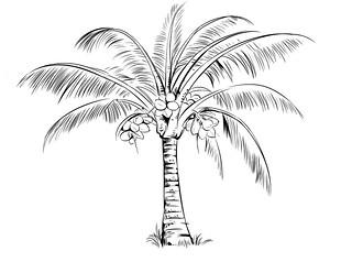 தென்னை மரம்