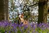 Uffmoor Woods_9X7A2682