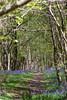 Uffmoor Woods_9X7A2713