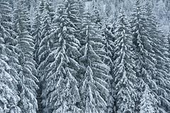 Abtenau Salzburger Land Winterlandschaft