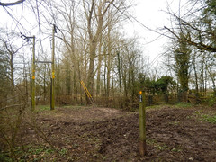 Photo of Woods with telegraph poles, 2021 Mar 20 -- photo 1