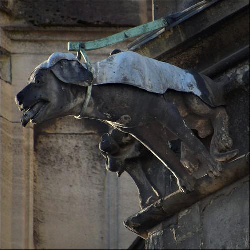 Trachyt-Jagdhund mit Schlappohren...