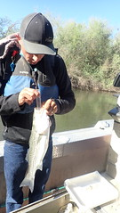 Collecting a Striped Bass Diet Sample
