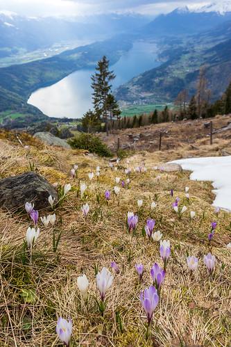 Spring on the Mirnock mountain