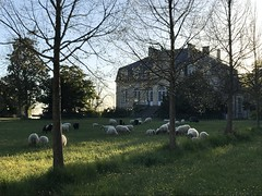 2021 - Avril - Beauval