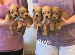 Belle Boys pic 4 5-7