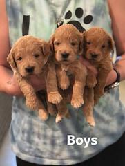 Cindy Boys pic 3 5-7