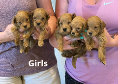 Belle Girls pic 2 5-7
