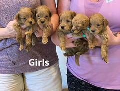 Belle Girls 5-7