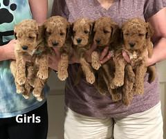 Noel Girls pic 4 5-7