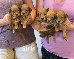 Belle Girls pic 4 5-7