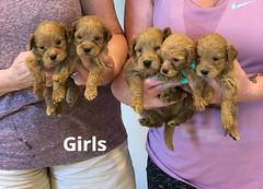 Belle Girls pic 3 5-7