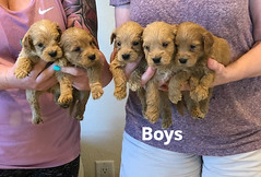 Belle Boys 5-7