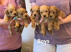 Belle Boys pic 3 5-7