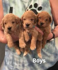 Cindy Boys pic 2 5-7