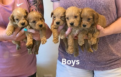 Belle Boys pic 2 5-7