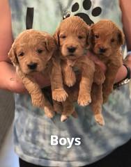 Cindy Boys pic 4 5-7