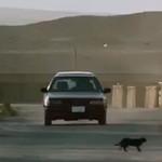 Zero Dark Thirty: The Black Cat omen before the BOOM