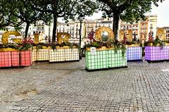 Girona Temps de Flors - 2021