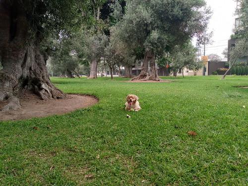 Lima- Parque El Olivar