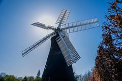 Holgate Windmill, April 2021 - 05