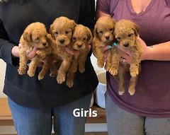 Belle Girls pic 3 5-14