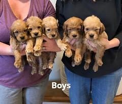 Belle Boys 5-14