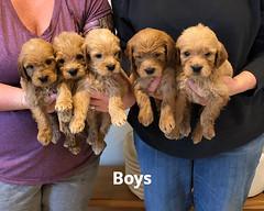 Belle Boys pic 4 5-14