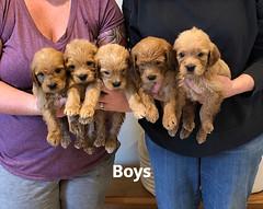 Belle Boys pic 25-14