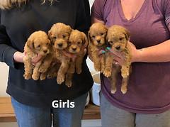 Belle Girls pic 2 5-14