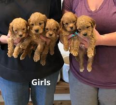 Belle Girls pic 4 5-14