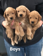 Cindy Boys 5-14