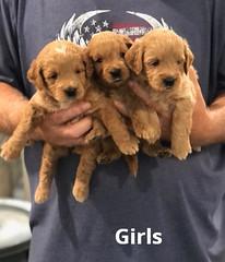 Cindy Girls 5-14