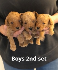 Georgie Boys 2nd set pic 4 5-14