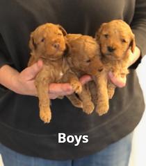 Georgie Boys pic 2 5-14