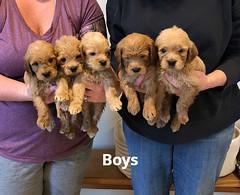 Belle Boys pic 3 5-14