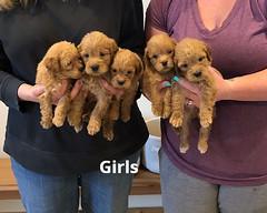 Belle Girls 5-14