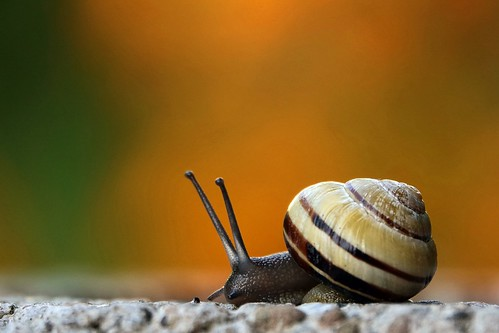 snail is on its way