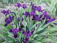 May 14, 2021 - Beautiful spring flowers. (LE Worley)/