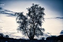 2021-05-17 20.09.39 - Mørke Nord, Uge 20, Nordre Fælled, Randers - _DSC5339 - ©Anders Gisle Larsson