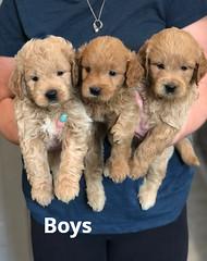 Cindy Boys pic 2 5-21