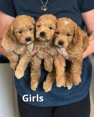 Cindy Girls pic 4 5-21
