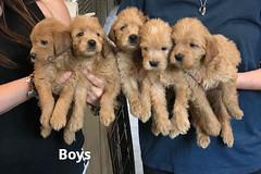 Belle Boys pic 3 5-21
