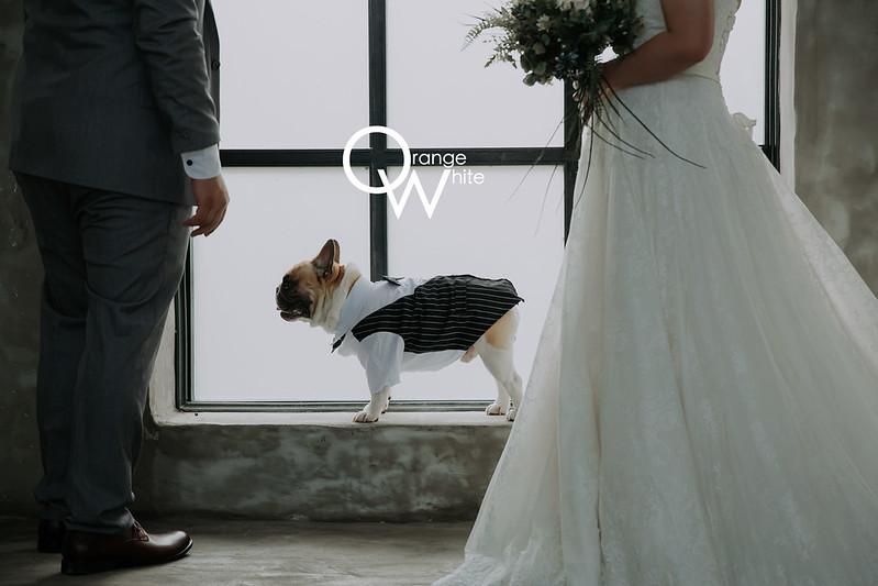 Anita俐婷, Fantasia Wedding Dress ,寵物婚紗,寵物寫真 ,婚紗攝影,自主婚紗,自助婚紗, 法鬥 ,法國鬥牛犬,格林童話 ,攝影基地,便宜,橘子白,工作室 ,推薦